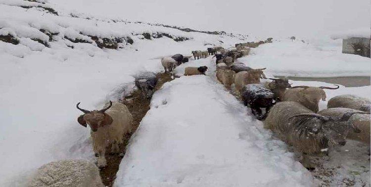 उत्तराखंड: हिमस्खलन की चपेट में आने से करीब एक हजार भेड़-बकरियों की मौत