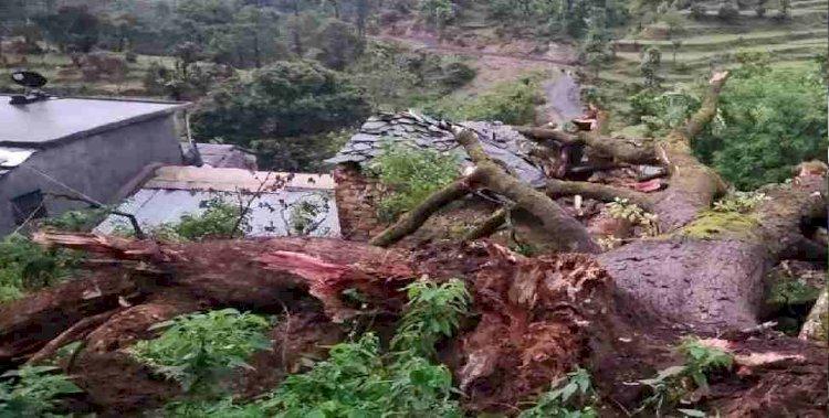उत्तराखंड: घर के उपर गिरा भारी भरकम पेड़, दो की मौत सात घायल