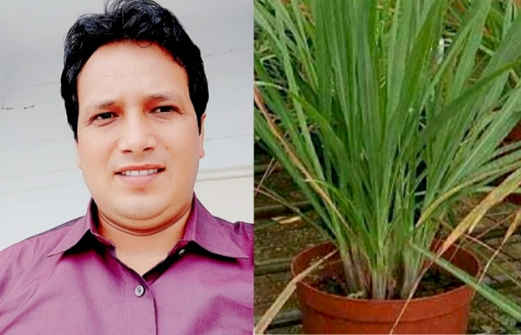 लेमनग्रास: पोषक तत्वों से भरपूर एक औषधीय पौधा