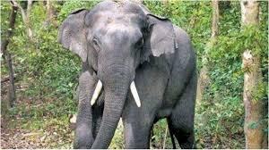 ऋषिकेश: घर लौट रहे किशोर पर हाथी का हमला, पटक-पटक कर ले ली जान