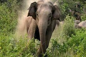 दोस्तों के साथ घूमने गए युवक को हाथी ने पटककर मार डाला